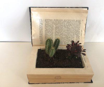 BRICO_Libro con pianta grassa medio