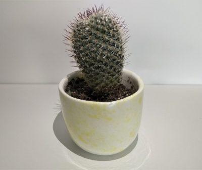 CER_Vasetto con pianta