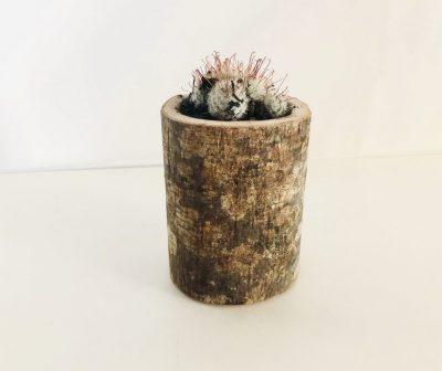FALE_Ceppo pianta grassa piccolo